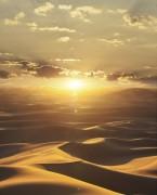 32545 шпалери Marburg колекція Dune
